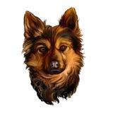Acuarela pintada ejemplo del vector del perro Foto de archivo libre de regalías