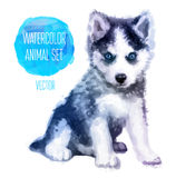 Acuarela pintada a mano de los perros esquimales del vector Imagen de archivo libre de regalías