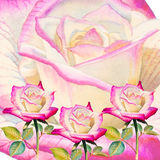 Acuarela que pinta la flor colorida del ejemplo realista de rosas Imagen de archivo libre de regalías
