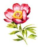 Acuarela roja de la flor de la peonía Stock de ilustración