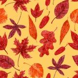 Acuarela roja de las hojas de otoño ilustración del vector