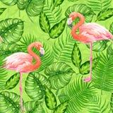 Acuarela tropical del flamenco ilustración del vector