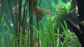Acuario, acuario, Marine Animals almacen de video