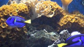 Acuario, acuario, Marine Animals metrajes