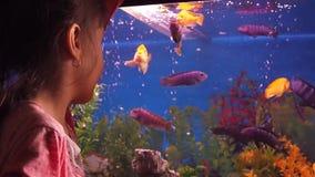 Acuario casero con los pescados almacen de metraje de vídeo