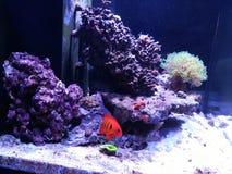 Acuario con los pescados Foto de archivo libre de regalías