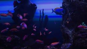 Acuario con los pescados exóticos metrajes