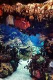 Acuario con los pescados, para el fondo Imágenes de archivo libres de regalías