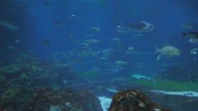 Acuario con los pescados y los tiburones metrajes
