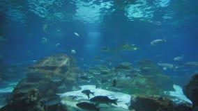 Acuario con los pescados y los tiburones almacen de metraje de vídeo