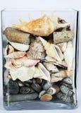Acuario con los shelles, las piedras y la grava Fotos de archivo
