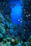 Acuario con muchas variedades de corales y de peces marinos coloridos Imagen de archivo