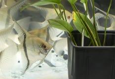 Acuario de agua dulce plantado tropical hermoso foto de archivo libre de regalías