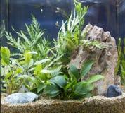 Acuario de agua dulce plantado tropical hermoso imagen de archivo