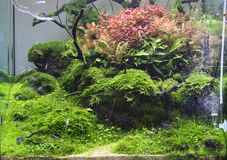 Acuario de agua dulce plantado tropical hermoso fotos de archivo libres de regalías