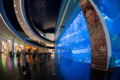 Acuario de Dubai y debajo del parque zoológico del agua Foto de archivo