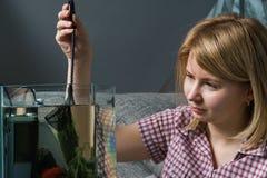 Acuario de la limpieza de la mujer joven con los pescados beta en casa imagen de archivo libre de regalías