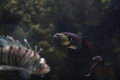Acuario de Londres de la vida marina Foto de archivo libre de regalías