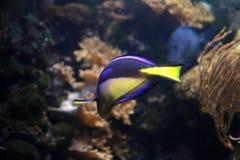 Acuario de Londres de la vida marina Fotos de archivo libres de regalías