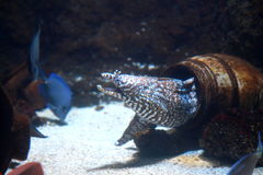 Acuario de Londres de la vida marina Foto de archivo