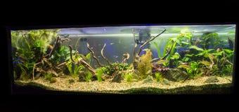 Acuario del agua dulce Imagen de archivo libre de regalías