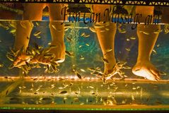 Acuario del masaje de los pescados Foto de archivo libre de regalías