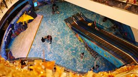 Acuario del mundo del océano de Bangkok de la vida marina almacen de metraje de vídeo