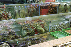 Acuario del restaurante de los mariscos Fotos de archivo libres de regalías
