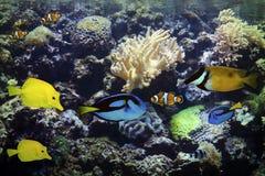 Acuario exótico y tropical Fotos de archivo libres de regalías