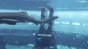 Acuario marino con los pescados enormes para el ataque de los tiburones de la atracción en el aquapark Aquaventure en la acción d