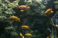 acuario marino en lové del ¡de Hradec Krà en la República Checa imagenes de archivo