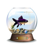 Acuario redondo con un pescado Foto de archivo libre de regalías