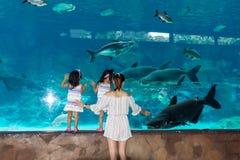Acuario Sentosa, Singapur del mar del underwarer de Singapur, el 14 de abril, foto de archivo libre de regalías