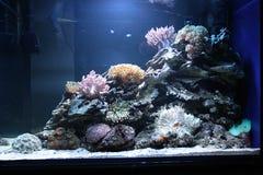 Acuario tropical de la agua de mar Imágenes de archivo libres de regalías