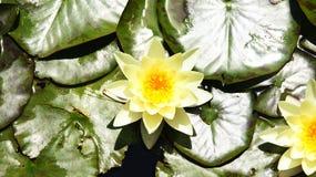 Acuatic-Anlagen in den Gärten von Mosen Cinto Verdaguer Lizenzfreie Stockfotos
