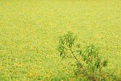 Acuatic rośliny Zdjęcia Stock