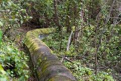 Acueducto de piedra antiguo en bosque del pino cerca de la ciudad de Los Realejos, Tenerife, España foto de archivo