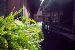 Acuerdo tailandés tradicional en el río con las casas Imágenes de archivo libres de regalías