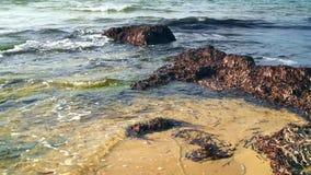 Acumulación de las algas marinas en costa de mar Mediterráneo almacen de metraje de vídeo