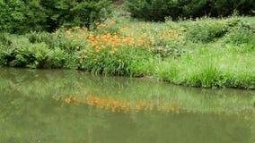 Acumule ajardinar con las plantas acuáticas en la costa metrajes