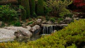 Acumule con la pequeña cascada en el jardín de Japón con las hojas otoñales rojas del árbol de arce de Japón, foco en fondo almacen de video