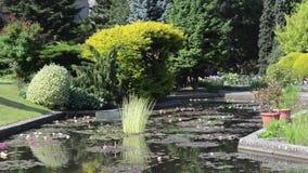 Acumule con los lirios de agua en el jardín botánico en Wroclaw, Polonia almacen de metraje de vídeo