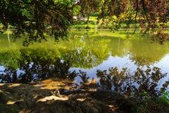Acumule con reflexiones del árbol durante día en el parque Foto de archivo