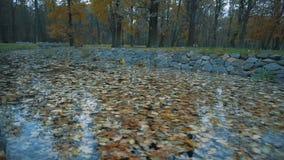 Acumule en el parque del otoño, cubierto con las hojas caidas almacen de video