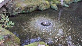 Acumule en el parque en Kyoto, Japón almacen de video
