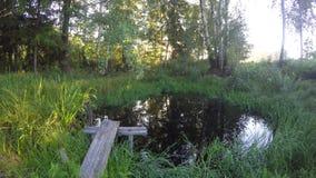 Acumule en la mañana soleada del otoño, lapso de tiempo 4K metrajes