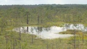 Acumule en la región pantanosa rodeada por los pequeños árboles de pino metrajes