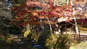 Acumule Kumobaike llamado en Karuizawa, Nagano, Japón almacen de video