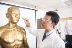 Acupoint de enseñanza del doctor de la medicina china en modelo humano fotografía de archivo