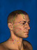 Acupuncture, 3D Model royalty free stock photo